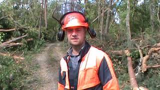 Wielkopolskie lasy dotknięte największym kataklizmem w historii Lasów Państwowych