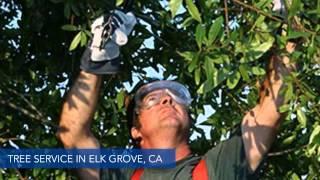 Tree Service Elk Grove Ca Sacramento Tree