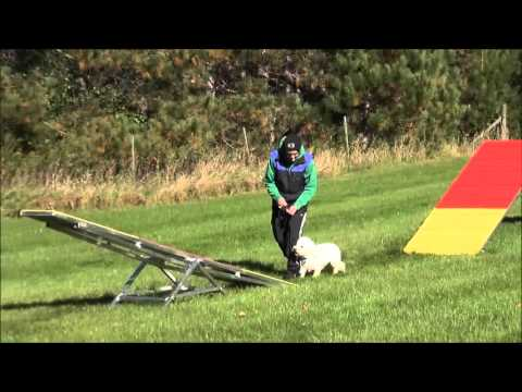 Ollie (Bichon Frise) Dog Training Boot Camp Demonstration