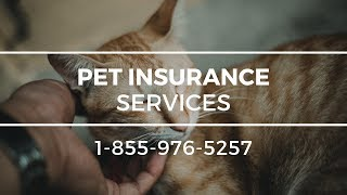 Pet Insurance Mattituck NY - Best Pet Health Insurance For Cats