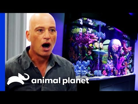 Eel Or No Eel?: Howie Mandel's Tank Reveal