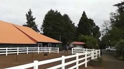 Wine tasting on horseback in Oregon's Pinot noir country