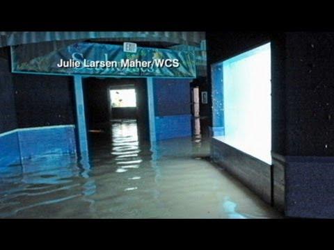 Flooded New York Aquarium May Evacuate Animals Youtube