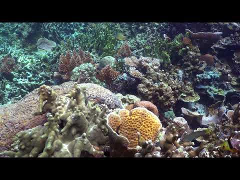 4K Palau Rock Island Reef Scene 2.5 minutes
