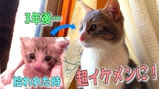 子猫の時と顔違いすぎん???? ご視聴ありがとうございました! ぜひ...