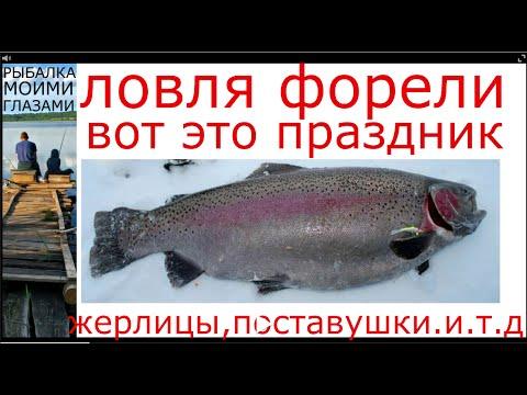 зимняя рыбалка на донки и жерлицы