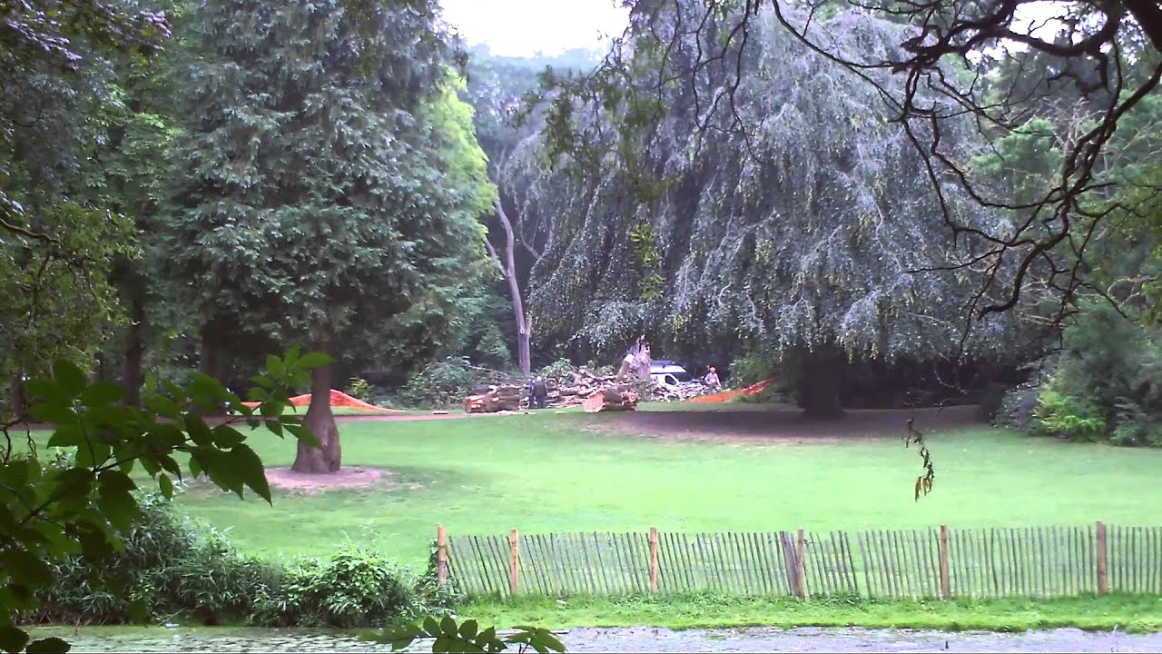 Mort d 39 un vieux marronnier malade au jardin vauban lille for Jardin vauban lille