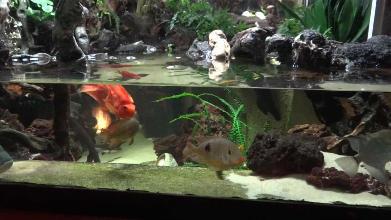 Aquaterrarium 1 ans après - YouTube Relaxing Music Youtube