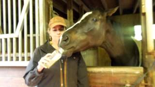 Rescued Hamptons Racehorse Enjoys Blueprint Cleanse Juice!