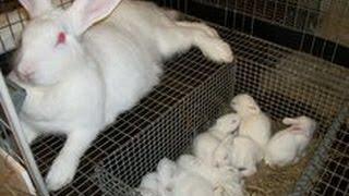 Rabbits - Dealing With Aggressive Rabbits