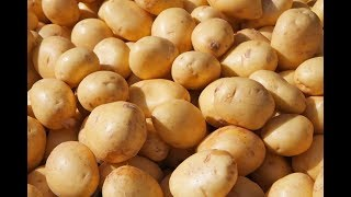 Mummy's Microwave cooking  -  How to Boil Potato in Tamil