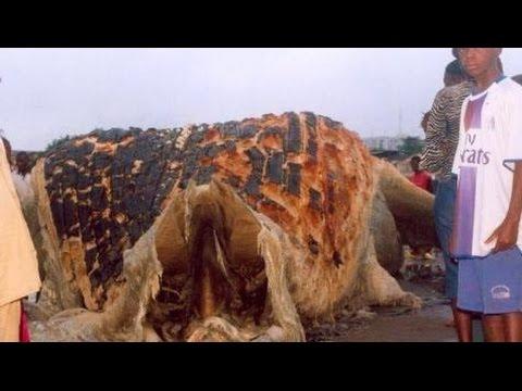 13-weirdest-creatures-washed-ashore