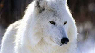 Native American Flute Music - White Wolf .wmv