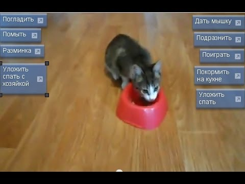 I игра про уход за котами
