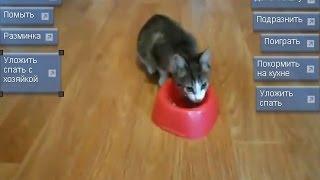 Бесплатные игры про котят - уход за котятами онлайн!
