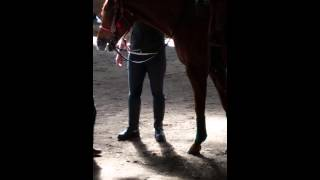 Cutter's horse back riding lesson's