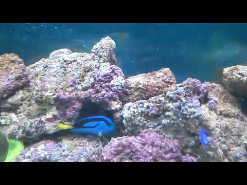 Murali - 150 Gallon Marine Aquarium - Chennai