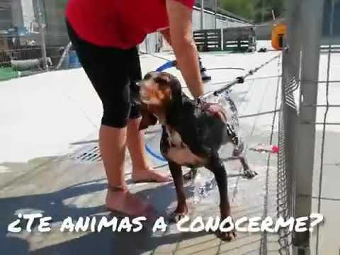 NELI PERRA SABUESO en adopción en la protectora de animales de jaca