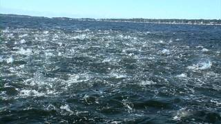 Hundreds of sharks in Red Bluff feeding frenzy