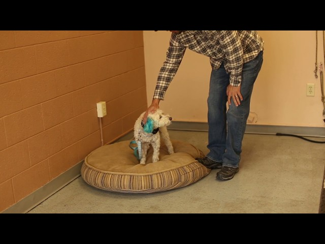 TYD60 Moment- Dealing With Dog Anxiety- Utah Dog Trainers