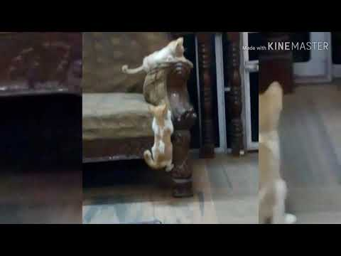 Brother cats fighting