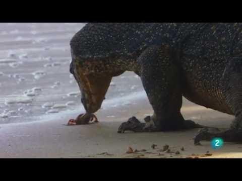 las-islas-más-salvajes-de-indonesia:-reino-de-gigantes-|-grandes-documentales