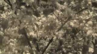 """Roger Karlsson """"Vilsna stackars jag"""" (Video)"""