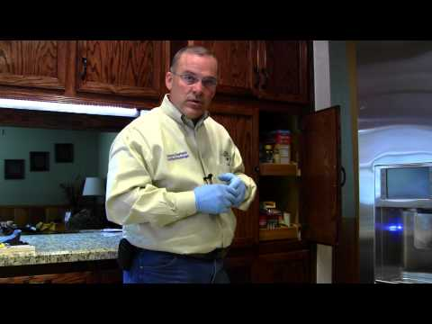Regular Pest Control Inside the Home (Part 1 of 2)