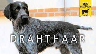 Video DRAHTHAAR trailer documentario download MP3, 3GP, MP4, WEBM, AVI, FLV Agustus 2018