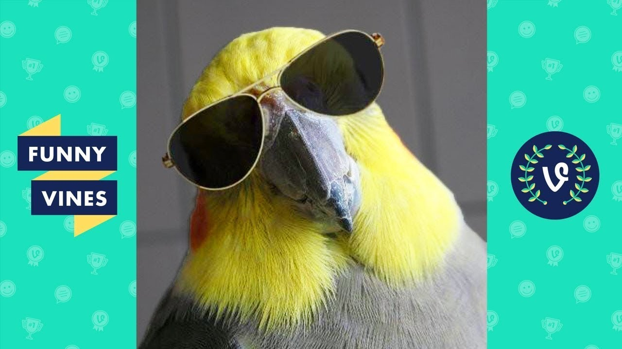 Funny BIRDS & PARROTS Compilation 2017