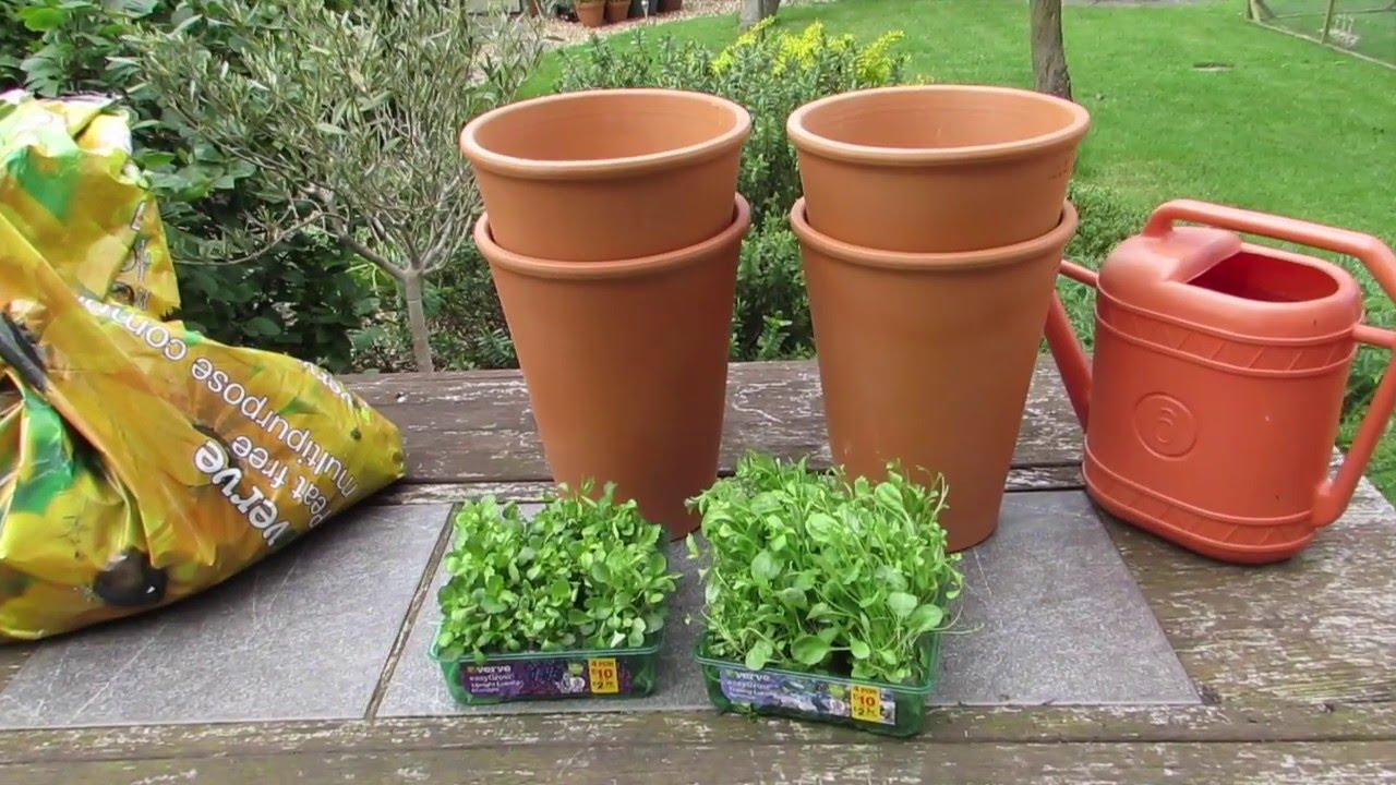 Planting Lobelia In The Garden Youtube