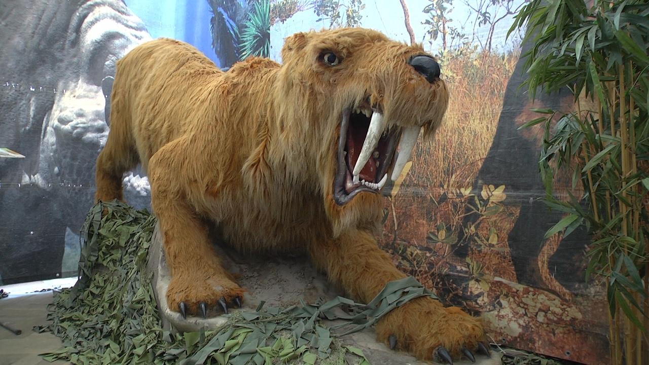 Четырехметровые мамонты и динозавры ожили в Липецке - YouTube