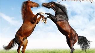 20 Wild Horses   STATUS QUO
