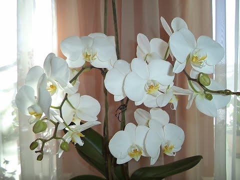 Подарили орхидеи! Что с ними делать? Как ухаживать?