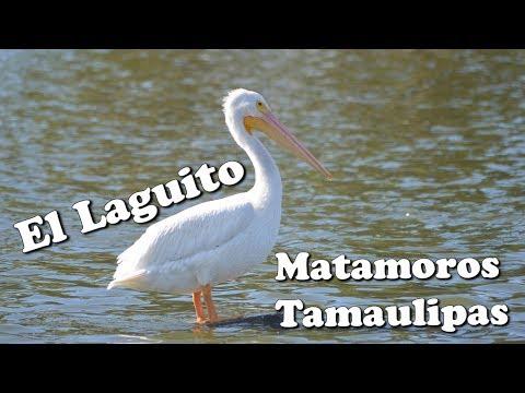 El Laguito, Matamoros, Tamaulipas, 2017