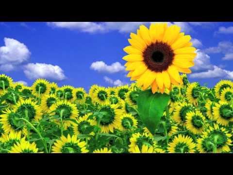 The sound of Sunshine - Michael Franti e Jovanotti +Lyrics