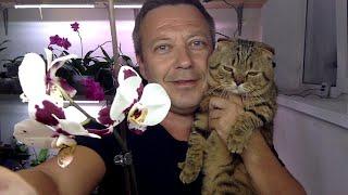 Орхидейный кот и две пятнистых орхидеи