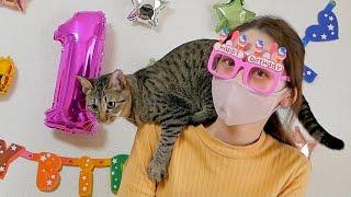 1歳になる猫の誕生日パーティーを張り切って準備してみた結果...