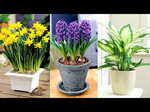 12-plants-don't-grow-your-garden-there-are-side-effects-for-you