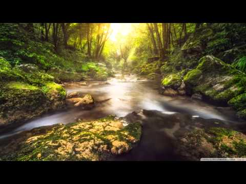 Stephen Anderson - Life Everlasting