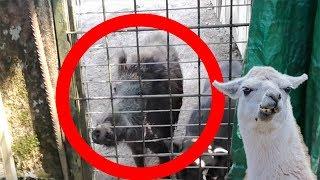 On s'infiltre dans un zoo abandonné encore remplit d'animaux ! Les ...