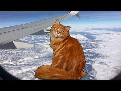 Surprise Attack | Cat President #5