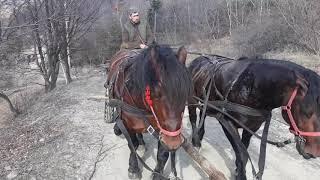 Caii lui Popa Cătălin