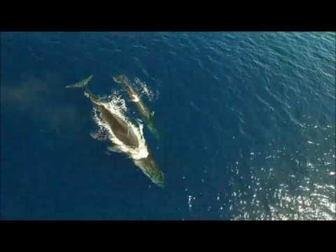 Pescadores del Serrallo avistan un rorcual común, el segundo animal más grande del mundo (2)