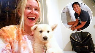 Surprising My Husband With A Puppy German Shepherd!
