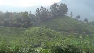 Munnar kerala beautiful scenery