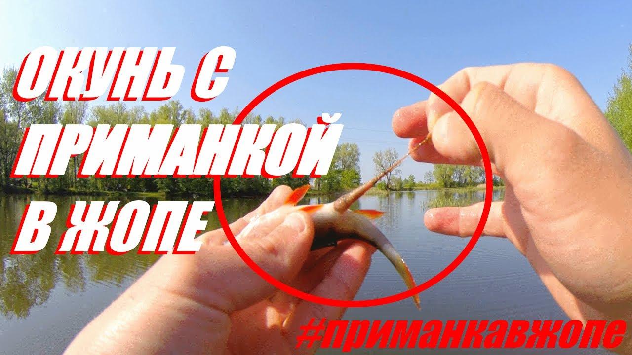 ribalka-na-zhopu-devushka-sidit-na-plechah-u-parnya-kunilingus