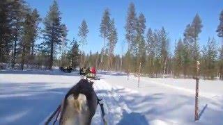 留学中にフィンランド北部にあるロヴァニエミに旅に出かけた時に撮影し...