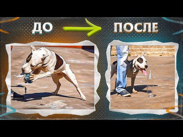 """Одержимость пластиковыми бутылками (Телепроект""""Искусство общения с собакой"""")"""