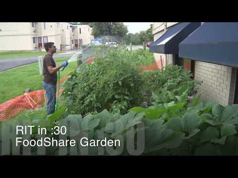RIT in :30 - FoodShare Garden